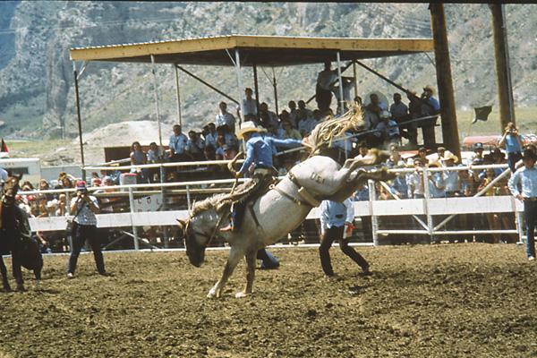 Cody-nite-rodeo