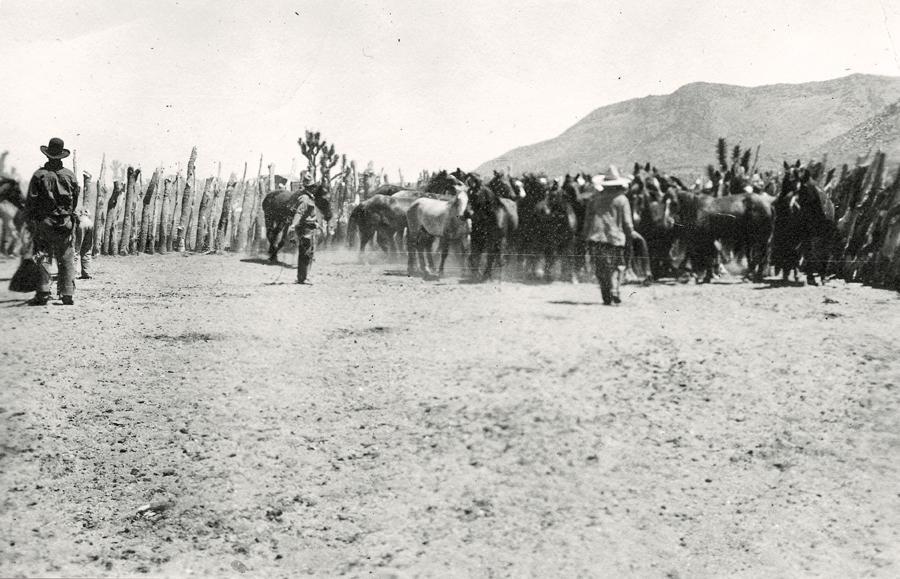 A Diamond Bar horse corral near Patterson Well, circa early 1900s.