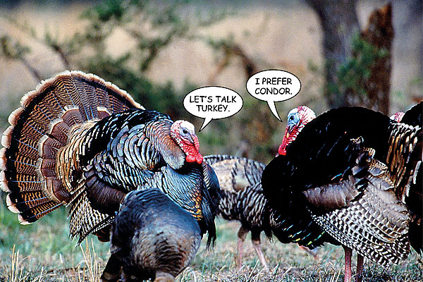 Gobble gobble goofs that will make you laugh.