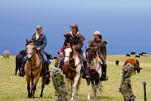 Paniolo culture comes to life on horseback tours of the 1847 Parker Ranch and 1928 Kahua Ranch.