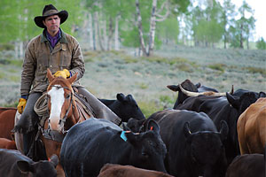 best_next_generation_rancher_tate_jensen_tavaputs_ranch_price_utah