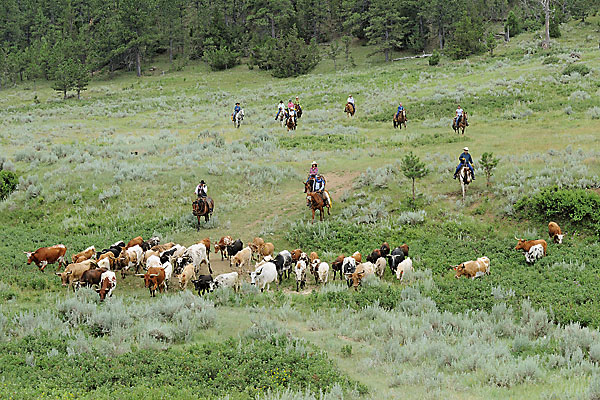 Image result for cattle ranches