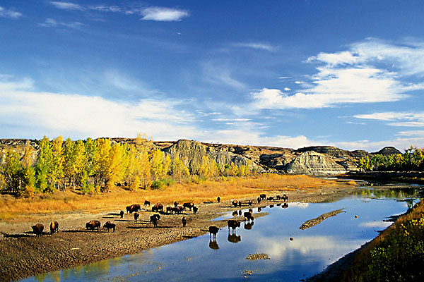 roosevelt-national-park