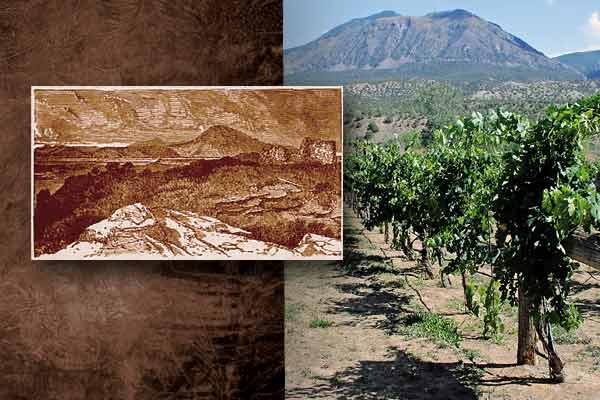 boggs_sutcliffe-vineyards_navajo-ruins