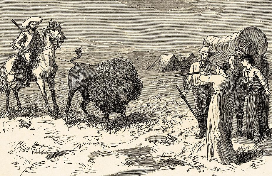 Ladies on the trail to the West traded in their petticoats for rifles and learned to shoot game needed to sustain themselves and their families.  In this romanticized illustration, this pioneer has cut a single buffalo out of a large drove so she can sell it. The hindquarters of a buffalo, weighing from 75 to 100 pounds, sold for $2.50!  Sharps's Model 1874 rifles were one of the most popular guns used to hunt American bison to near extinction in the late 19th century.– Courtesy Denver Public Library –