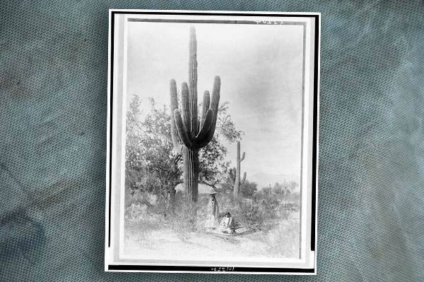 pima-women-gathrering-saguaro-fruit-by-edward-curtis-loc-3c01252r-blog