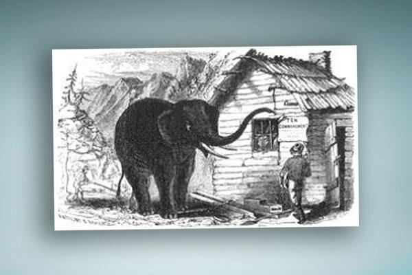 seen-the-elephant-blog