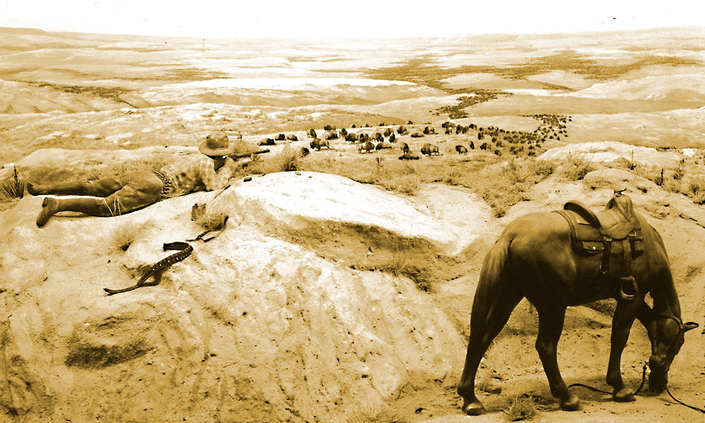 Millions of buffalo once roamed freely upon the Great Plains