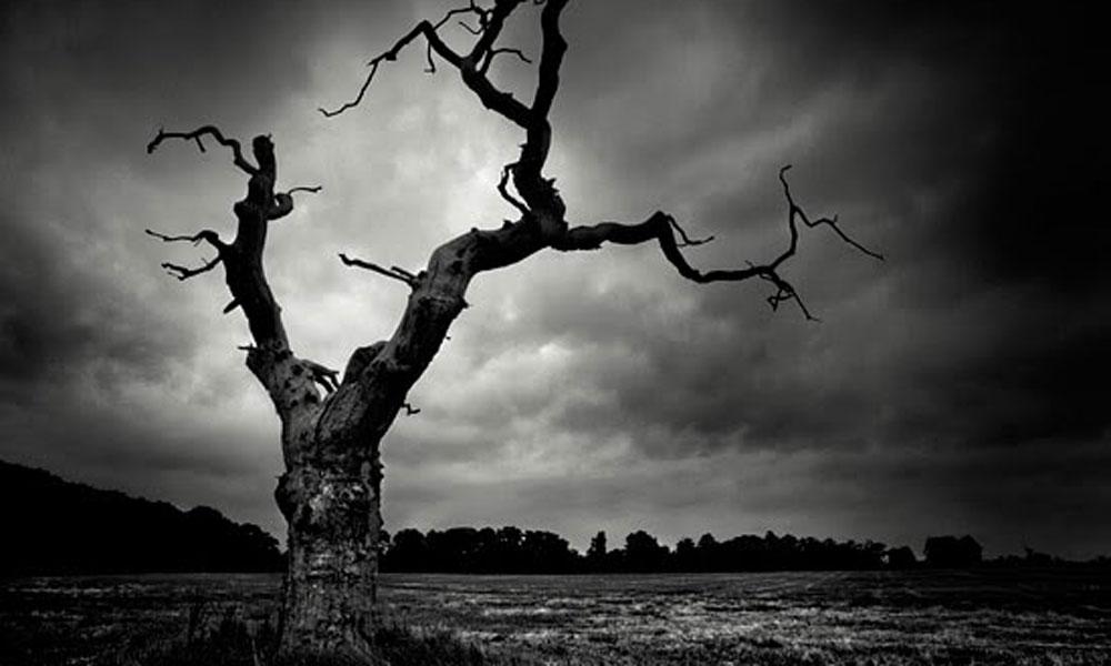 Hanging-Tree-blog
