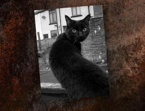 cat-blog