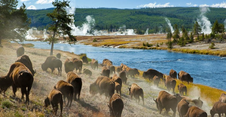 yellowstone-national-park-blog