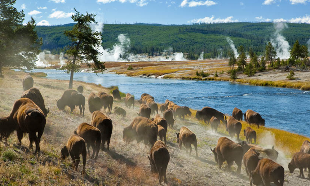 ... park in the world—Yellowstone National Park, on March 1, 1872