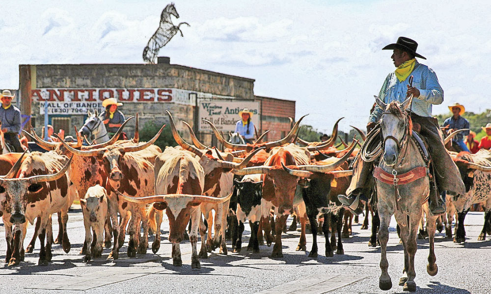 One of the highlights of Bandera Days is the Texas Longhorn Cattle Drive leading the Celebrate Bandera Parade down Main Street. - Courtesy Barbara Shanle –
