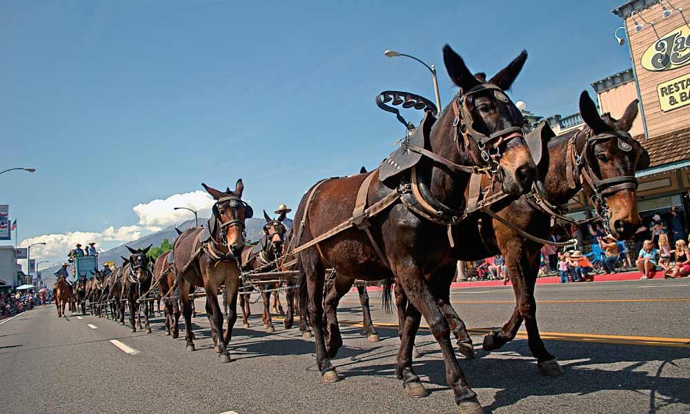 Bishop Mule Days