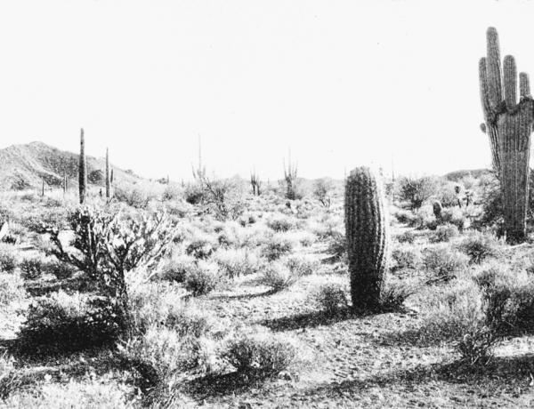 1280px-PSM_V66_D110_Arizona_desert_scene_without_irrigation