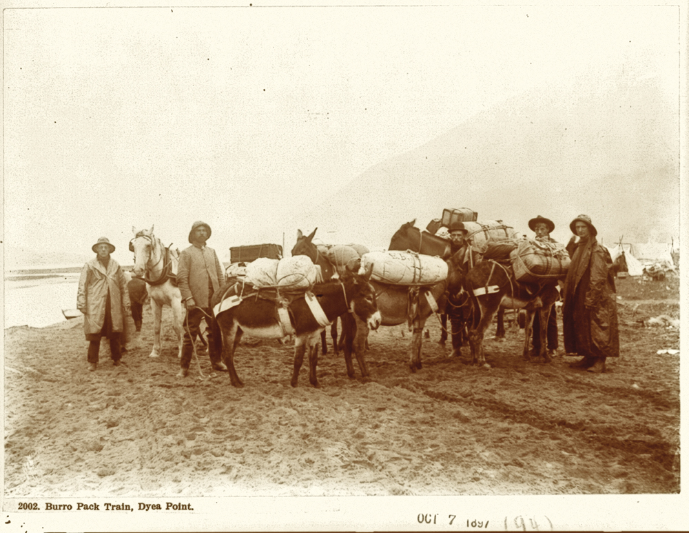 This burro pack train, photographed at Dyea Point in Alaska in 1897, is carrying in supplies that sustained the gold stampeders. Period newspapers reported these supplies included flour, rolled oats, beans, sugar, dried potatoes, dried onions, salt, pepper, baking powder, soda, compressed soup and mustard. – Courtesy Library of Congress –