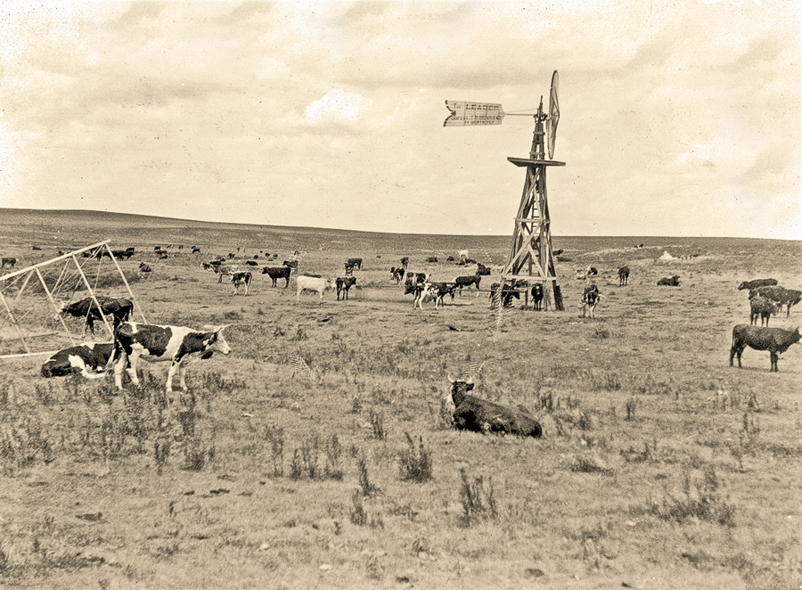 F_DE_Cattle-watering-at-the-tank.-17-miles-northeast-of-Panhadle.-Carson-County,-Texas.-ca