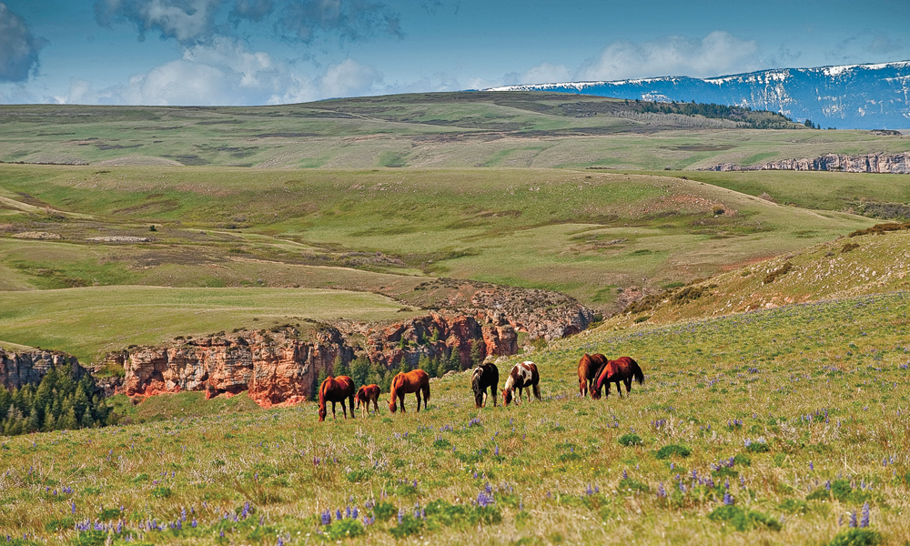 RR_Lead_MT-Big-Horn-Canyon-National-Recreation-Area-Southeastern-Montana--