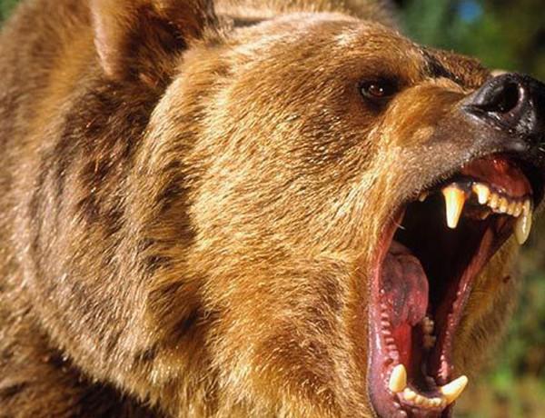 grizzly-hugh-glass