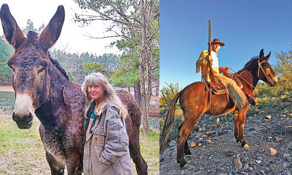 mule mules true west